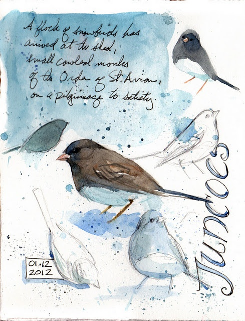 Image result for nature sketch nook junco