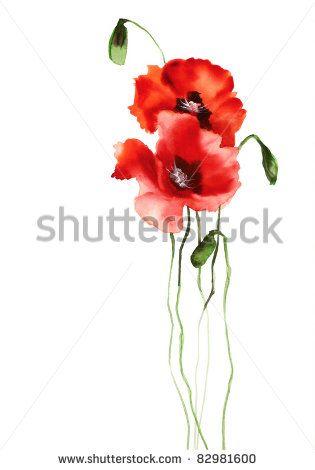 Two poppies - stock photo