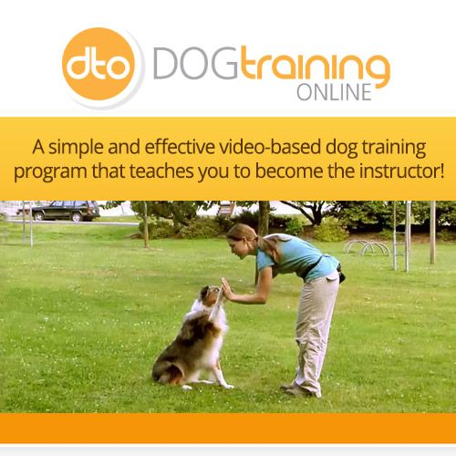#DogTraining #DogLover For dog lovers awesome online training! Training your dog can be fun! http://68bbddr517pr0hy8o8cvep9odu.hop.clickbank.net