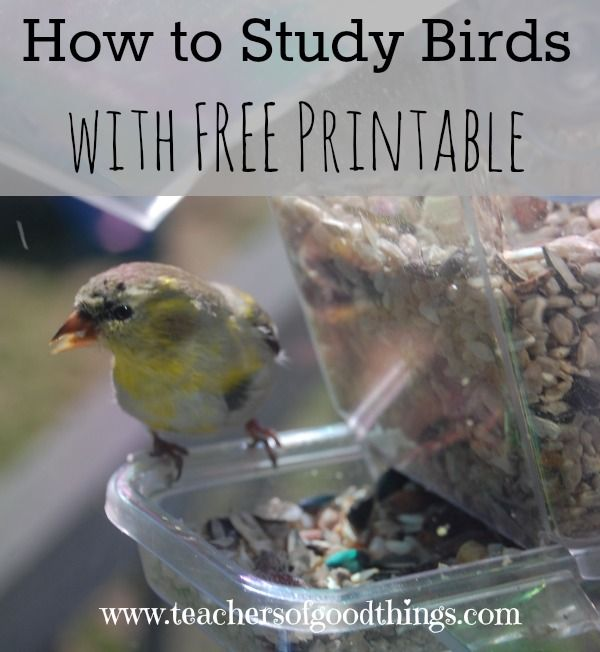 How to Study Birds with FREE Printable, plus a list of 25 of the easiest birds to learn.