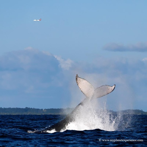 009 Pin by Lori Edmond on Dolphins and whales Pinterest Whales