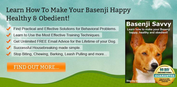 Basenji Training Tips You Should Know