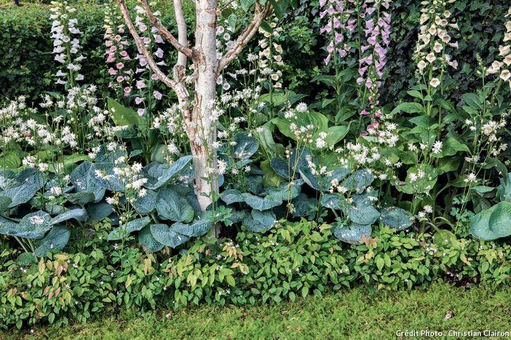 les 25 meilleures id es de la cat gorie plantes couvre sol sur pinterest couvre sols dans des. Black Bedroom Furniture Sets. Home Design Ideas