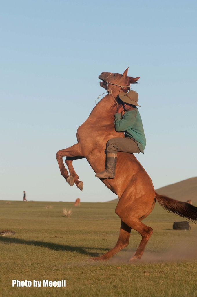 Mustanger Mongolia