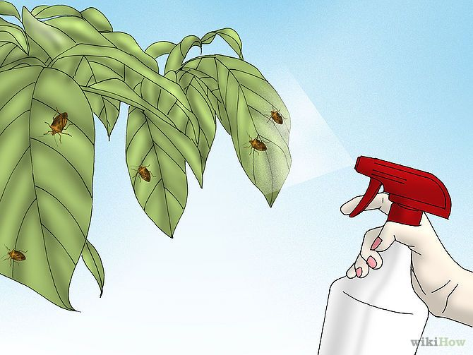 Get Rid of Stink Bugs Naturally - http://www.wikihow.com/Get-Rid-of-Stink-Bugs-Naturally