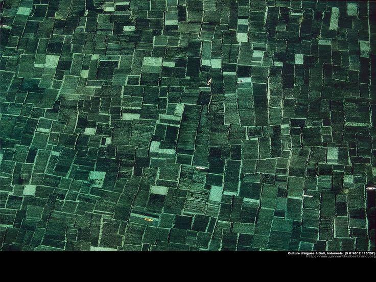 Indonesie_jpg.jpg (1600×1200)
