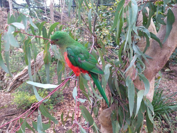 Celebrating bird week at Healesville Sanctuary