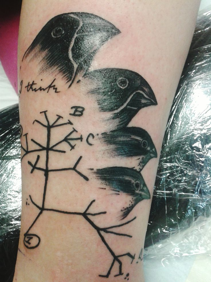 My first Tattoo: Darwins first scribble of the tree of life out of his notebook and aditionally 4 Darwin Finches :)