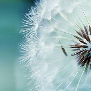 """Ibnu Qayyim mengatakan """"Ketika orang lain bergantung pada dunia gantunglah dirimu hanya kepada Allah. . Ketika orang lain merasa gembira dengan dunia jadikanlah dirimu gembira kerana Allah. . Ketika orang lain merasa bahagia dengan kekasih-kekasih mereka jadikanlah dirimu bahagia dengan  Allah. . Dan ketika orang lain pergi menghadap raja/pembesar untuk mengais harta dan mencintai mereka jadikan dirimu benar-benar mencintai Allah."""" . Sesungguhnya dalam hati ada satu koyakan yang tidak dapat…"""