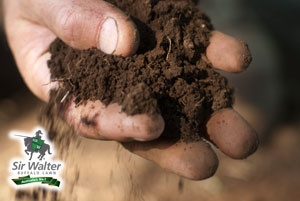 Good foundations  It's always worth knowing what condition your soil is in before you install a new lawn or replace an existing one. While some grass varieties only thrive in certain types of soil, pre-emptive action to improve your soil will enable you to lay most types of grass without issue.