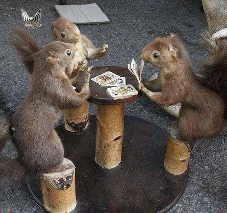Playing for nuts