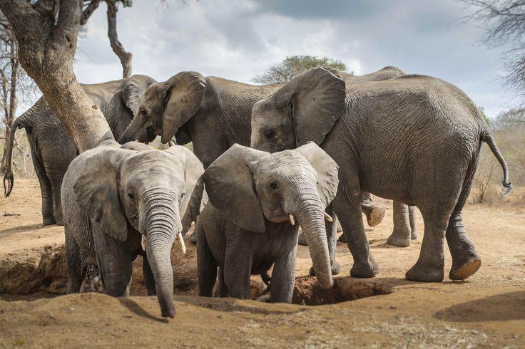 Elephants @ Camp Jabulani  Photo credit Black Bean Productions