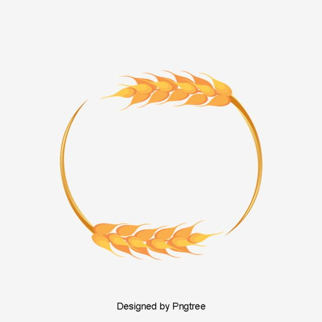 Beautiful Wheat Border Frame Vector Wheat Wheat Png Transparent Clipart Image And Psd File For Free Download Wheat Vector Wheat Design Vector Border
