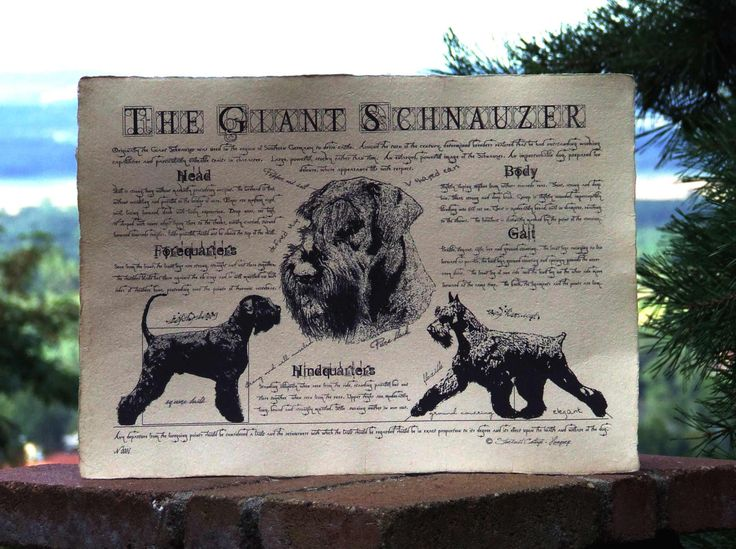 Antique styled dog standard - Giant Schnauzer by Creativedoglover on Etsy