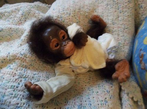 Reborn Baby Umi Monkey Art Doll Ooak Doll Monkey Silicone