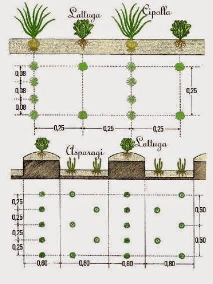 17 migliori immagini il calendario biodinamico per orto - Calendario semina fiori ...