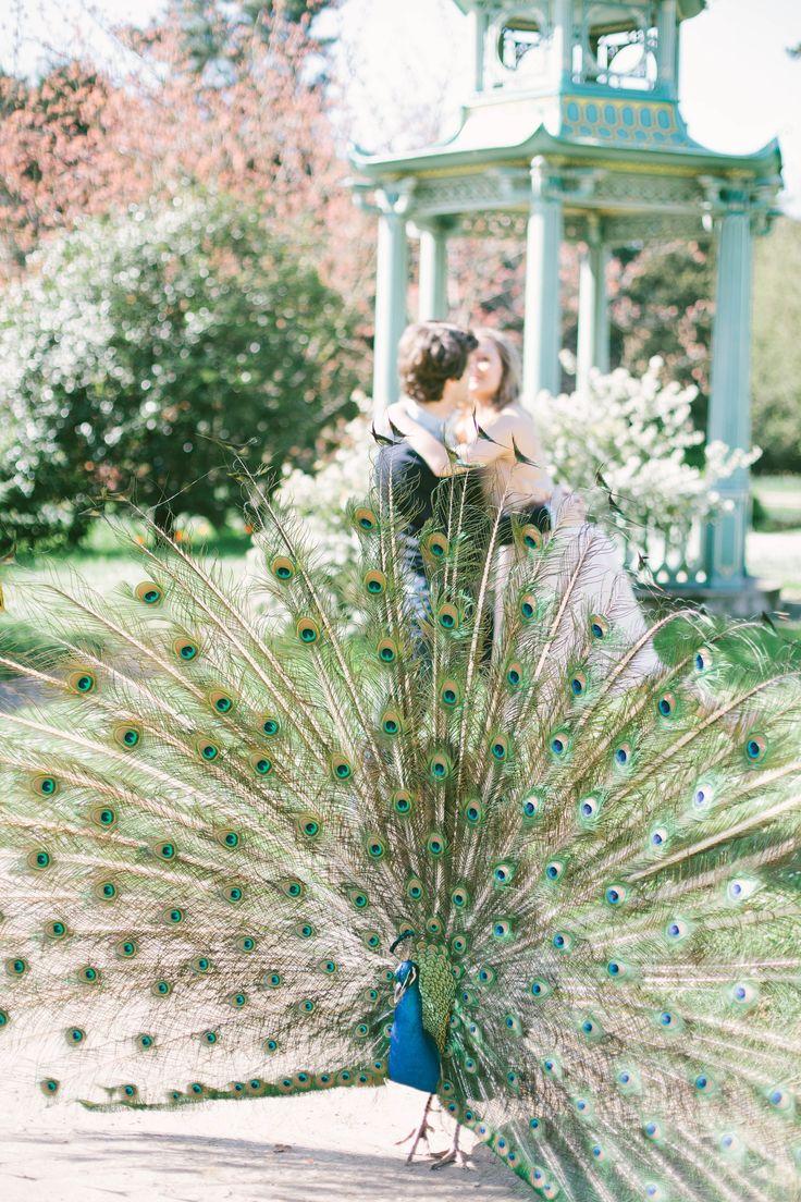 Peacock in garden, Paris engagement pictures, jardins de bagatelle, romantic place in Paris