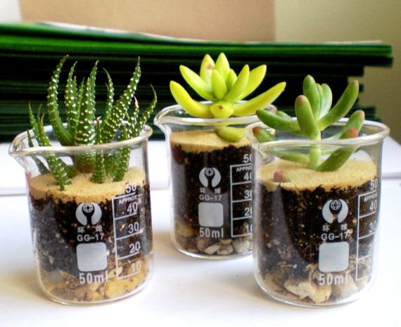 Cool. I should do this for my classroom. Wonder if I could keep these plants alive?
