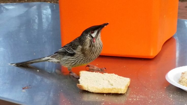 This little guy crashed our bbq and started eating our bread