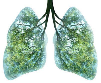 Afbeeldingsresultaat voor green longs tree