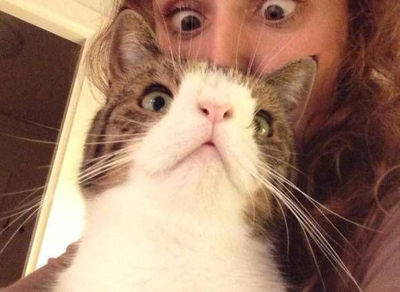 カラパイア : ちょいと風変わりで愛嬌のある顔をした猫のモンティー。出会った瞬間に恋に落ちたカップルは家族へと迎え入れた。 karapaia.livedoor.biz/archives/52178… pic.twitter.com/qiY5gYnLad