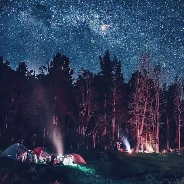 Berkemah di bawah jutaan bintang dengan di kelilingi hutan pinus yang asri