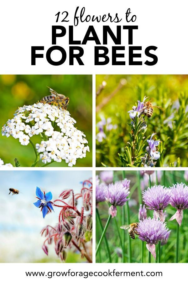 12 Common Flowers To Plant For The Bees That Are Good For Us Too In 2020 Pollinator Plants List Of Flowers Bees Plants