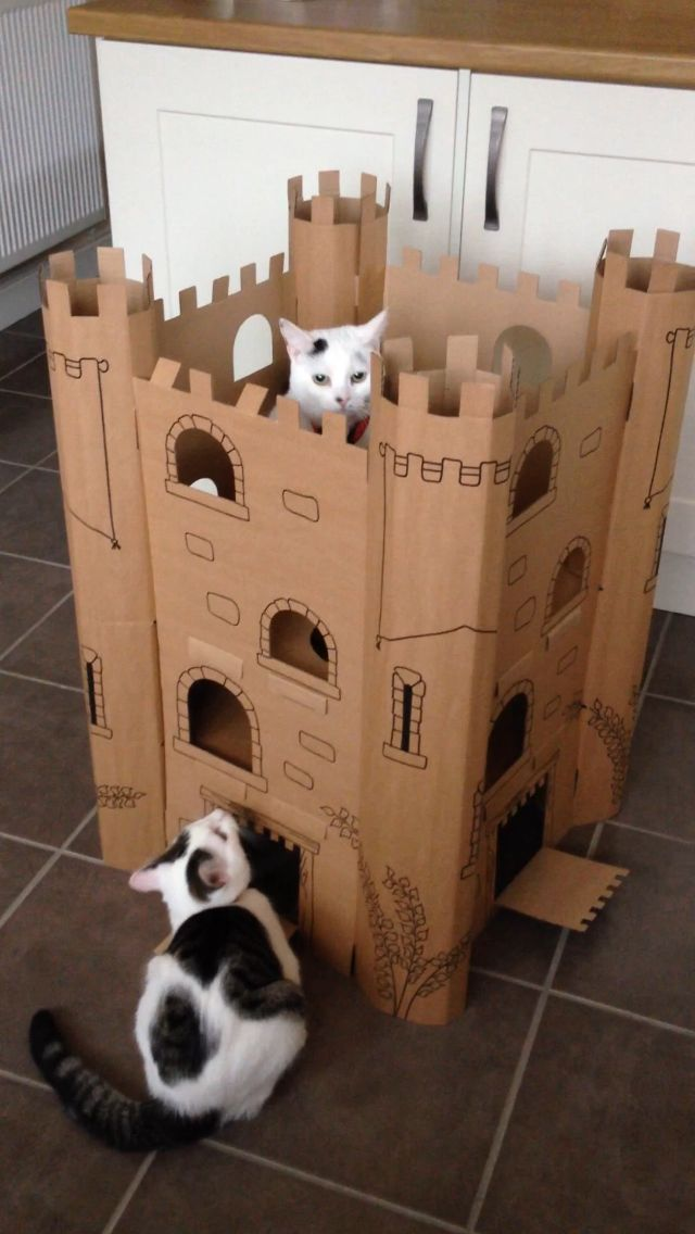 CoCo & Snowy Queens of there castle. Thank You Happy Tails Pet Services Lincoln.