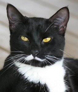 Best Tux Cats Images On Pinterest Cats Funny Animals And Love - The internet has fallen in love with zo the cat that wears her heart on her chest