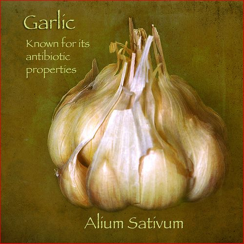~ Medicinal Uses For Garlic ~