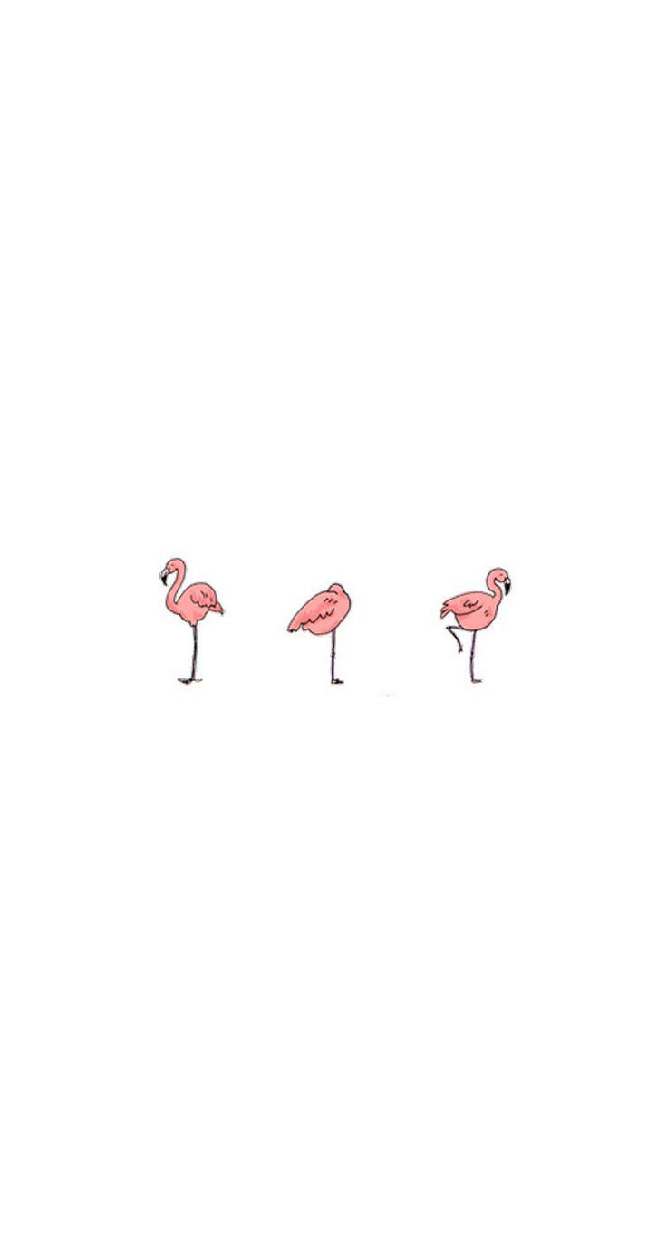 #Flamingos / Download more #fancy #iPhone #Wallpapers at @prettywallpaper