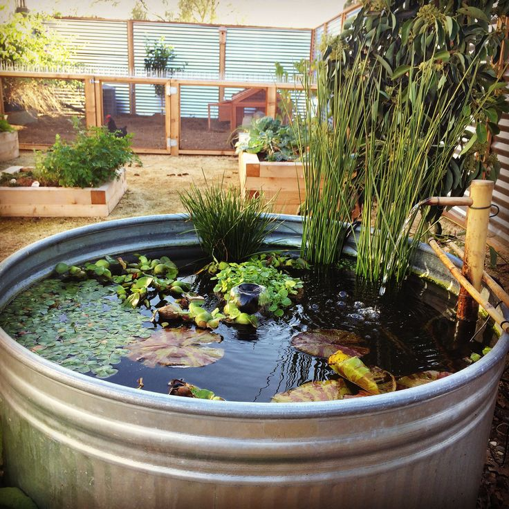 Koi Pond Made From 165 Gallon Galvanized Tub With A 24inch