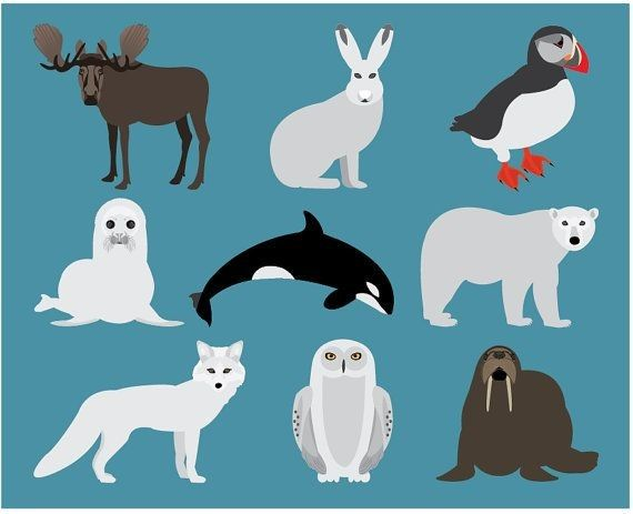 With Tundra Animals Clipart