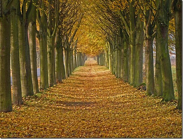 This landscape element combines both the incredible natural beauty of trees, and symmetry. The entire intent of an allée is to emphasize the axial view.