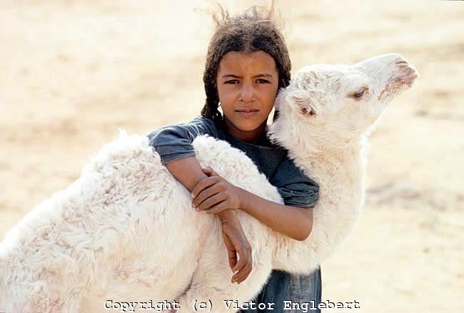 Niger. Sahara Desert. Tuareg nomad girl with baby camel.