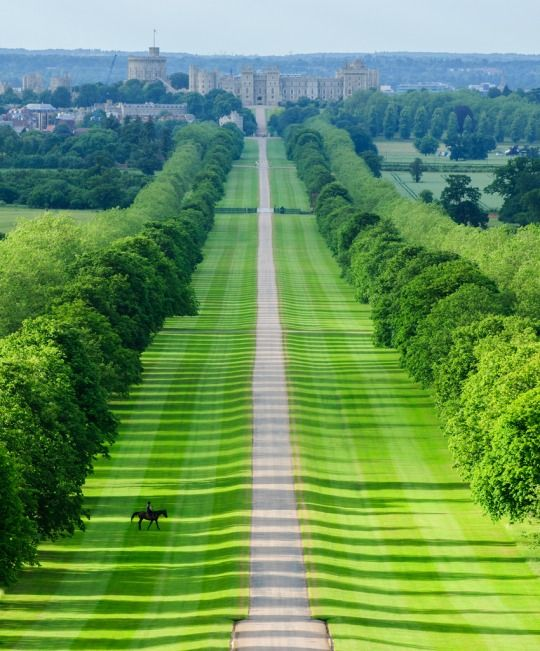 The Long Walk at Windsor Castle, Berkshire, England by Tomas Burian