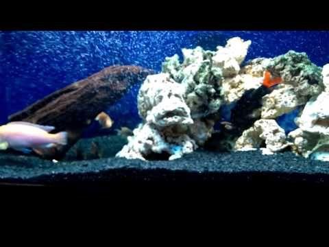 Pedras artificiais caseira, para aquário de água doce ou marinho! - YouTube
