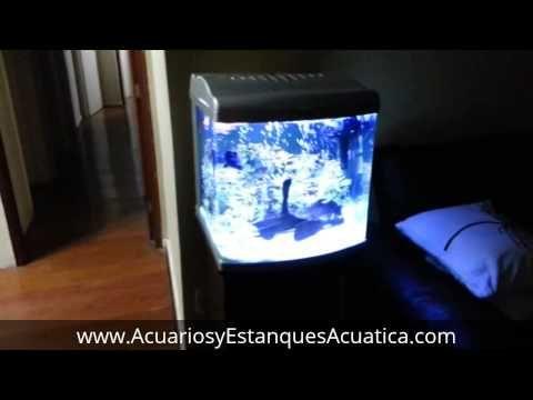 Acuario BOYU MT-50 Adquiera en nuestra tienda al mejor precio y envio gratis: http://acuariosyestanquesacuatica.com/acuarios-de-agua-dulce/552-acuario-boyu-mt-50-kit-80l.html