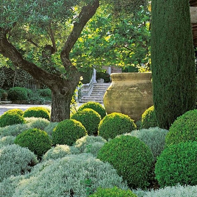 Amazing Topiary: 1000+ Images About Gardening On Pinterest