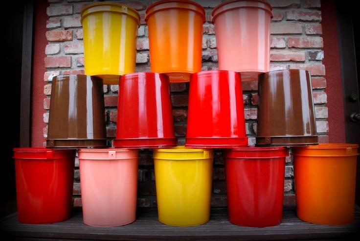 Spray painted 5 gallon buckets as garden pots!!!  California Pixie