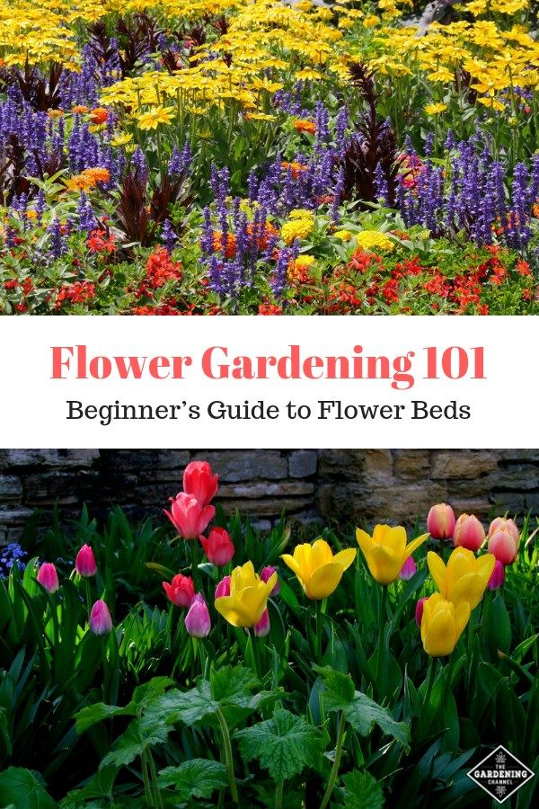 What Is A Flower Garden A Beginner S Guide To Growing Flowers At