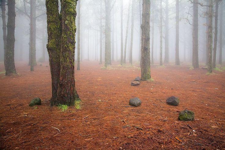 Туманный лес, Тенерифе, Канарские острова.   #этноспб #природа
