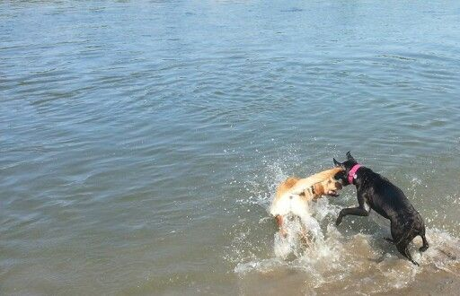 Playing with her friend in the river