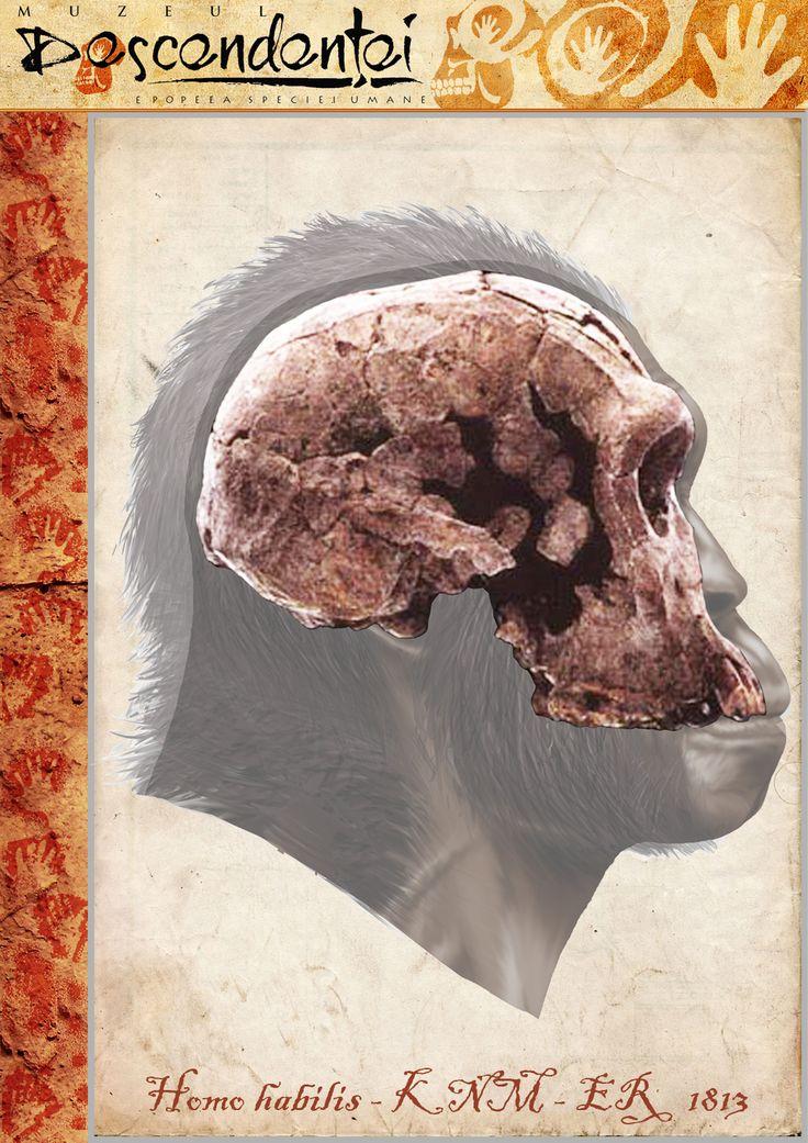 Homo habilis - KNM-ER 1813 - reconstruction by Eduard Olaru