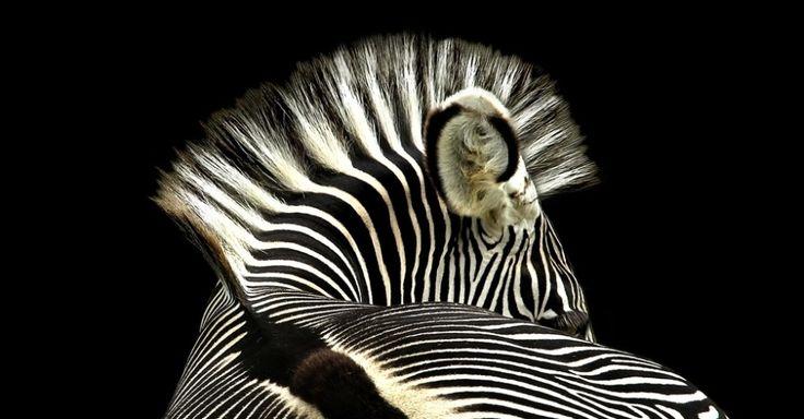 Concurso premia fotos de flagras de animais - Fotos - Meio Ambiente