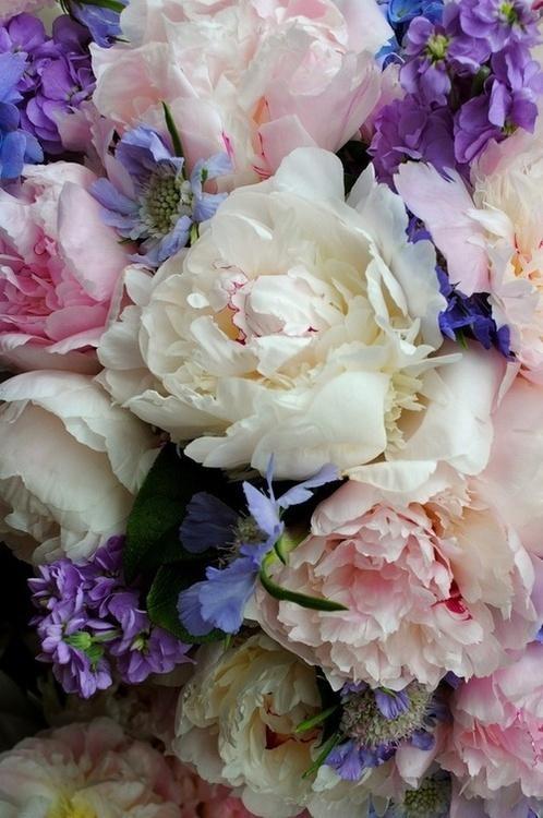 purple: Rose, Pastel, Colors Combos, White Flowers, Bouquets, Colors Combinations, Pretty Flowers, Beautiful Flowers, Peonies