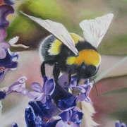 Bumblebee no. 2, oils, 70 x 60cm by Dublin artist, Philip Doyle
