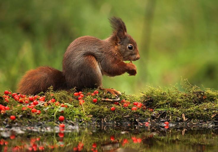 Glenn Vermeersch Natuurfotografie