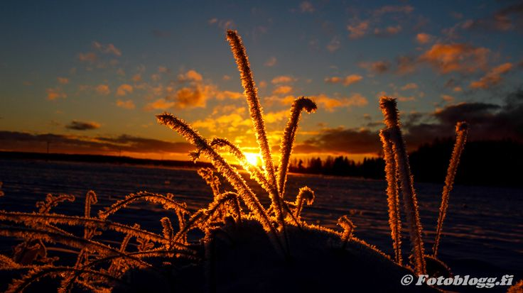 Sundom Vinterbilder 23.11.2015 - Fotoblogg.fi