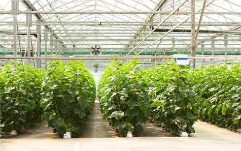 hydroponic farm business plan